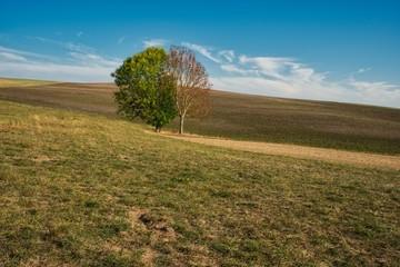 Wiesen und Hügel im Herbst