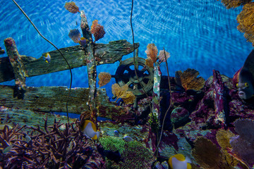 Beautiful Under Water Colorful Wooden Wheel wtih Fishes