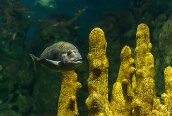 Close up landscape photo of exotic wildlife underwater colorful fish in sea and ocean world
