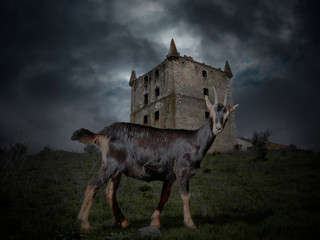Mysterious goat against medieval background