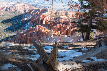 Bryce Canyon winter landscape two