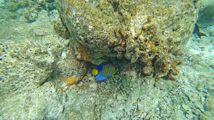 The fauna of the Indian Ocean under water with corals and fish