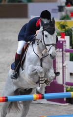 equestrian v