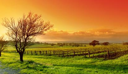 krajobraz winnicy