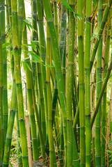 bamboo stalks