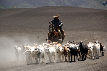 herdsman and goats near vulcan antuco in patagonia