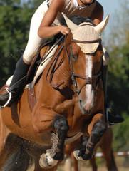 cheval et sa cavalière sautant un vertical