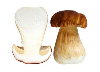 Boletus edulis, delicious forest mushroom, isolated