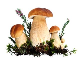 Forest mushrooms - Boletus edulis, isolated