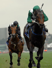 Race horse head on towards the finish