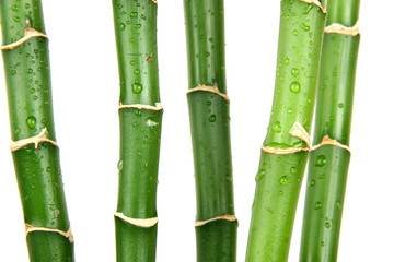 green wet bamboo isolated on the white