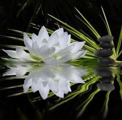 perfumy zen