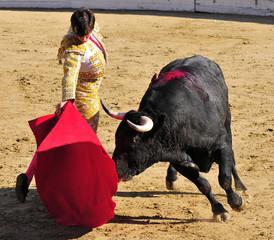 Matador & Bull