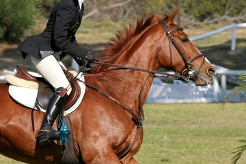 Show Horse and Rider
