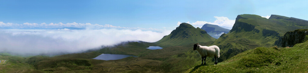 A little lamb above the clouds in Quirang, Isle of Skye