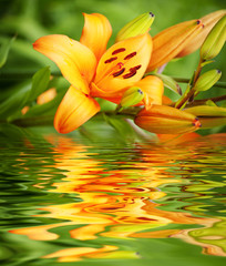 spring flower on water background