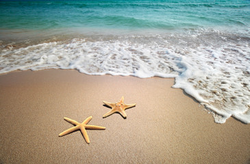 dwie rozgwiazdy na plaży