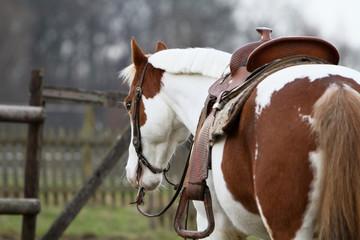 Pferd wartet