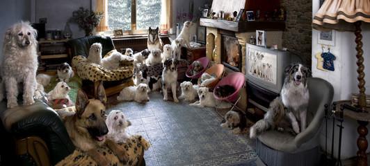 Portret 24 psów w salonie przed telewizorem