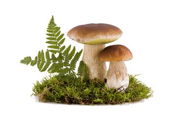Two porcini mushrooms