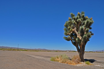 Parkplatz in Mojave Wüste