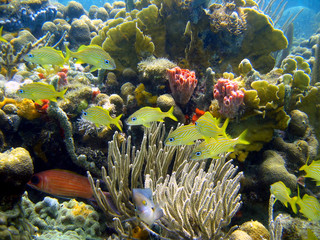 Beautiful coral with fish in panama - Bocas del Toro