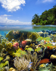 Surface and underwater scenery in the Caribbean sea with colorful marine life in a coral reef and lush tropical island shore