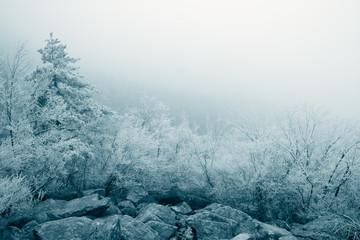 rime ice landscape