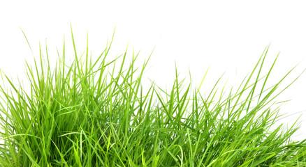 fresh spring green grass i