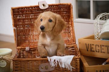 バスケットの中の仔犬