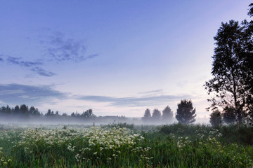 Meadow landscape