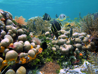 Seafloor with corals and tropical reef fish in the Caribbean sea, Bocas del Toro, Panama, Central America