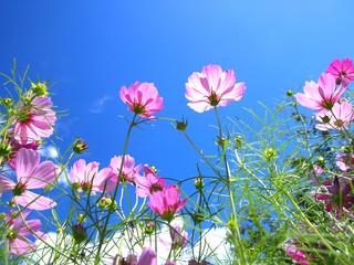 晴れた日のお花畑