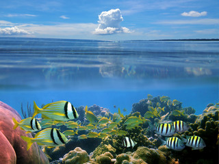 Surface and underwater split view in the Caribbean sea with a school of tropical fish in a coral reef and blue sky with cloud