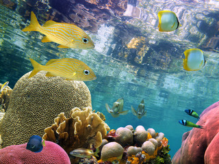 Below the mirror surface of the Caribbean sea lies a thriving coral reef with colorful tropical fish