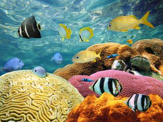 Colorful corals and tropical fish under water surface