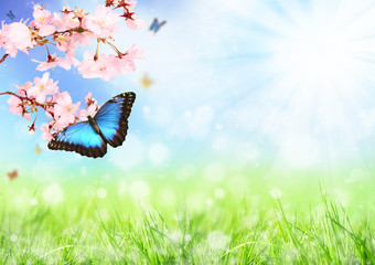 Beautiful spring meadow with exotic butterfly on blooming branch