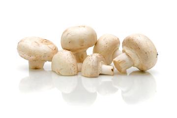 white mushrooms on a white background