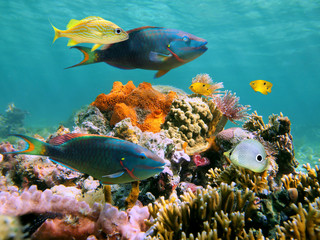 Colorful tropical fish and marine life in a coral reef, Caribbean sea