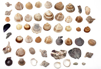 set of different sea shells