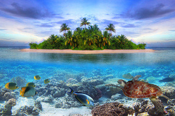 Marine life at tropical island of Maldives