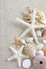 夏 砂浜 貝殻 海星