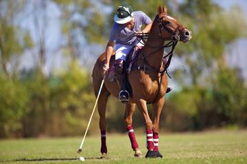 joueur de polo avec cheval balle et maillet