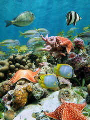 Colorful underwater marine life with starfish and tropical fish on a coral reef of the Caribbean sea