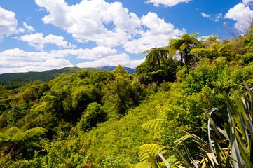 Lush Landscape near Rotorua, New Zealand