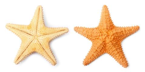 The Caribbean starfish ( Oreaster reticulatus ).