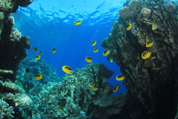 Underwater Coral Reef Scene with Butterflyfish
