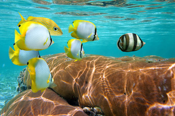 Colorful tropical fish and coral under water surface, Caribbean sea, Mexico