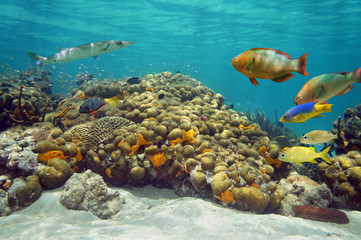 Underwater landscape in a coral reef