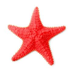 The common Caribbean starfish Oreaster reticulatus